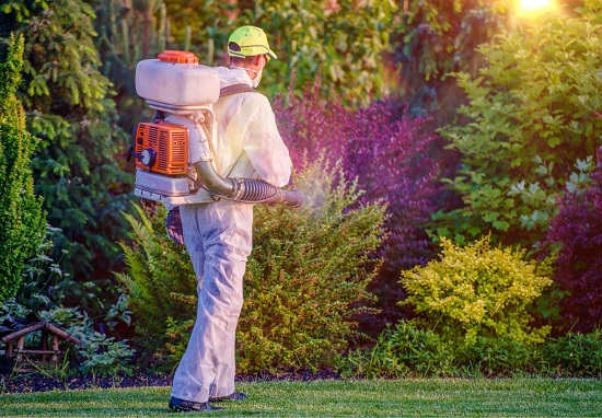 Pest control specialist using a backpack mosquito fogger on shrubbery